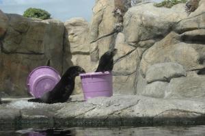 otters, Monterey Bay Aquarium, blog